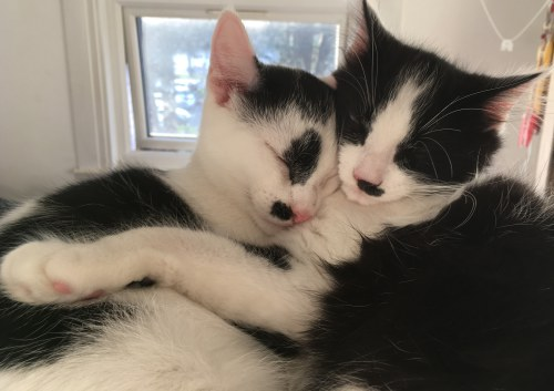 cats in sleepful harmony - cat sitting service in Eastbourne